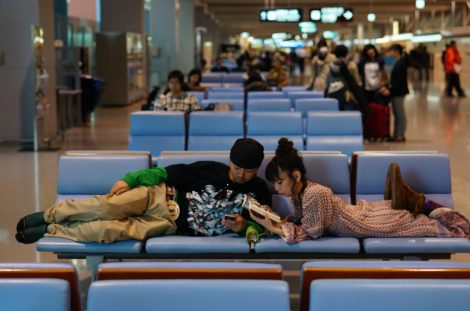 They may look lethargic but by far, the most alive in Kansai Aiport